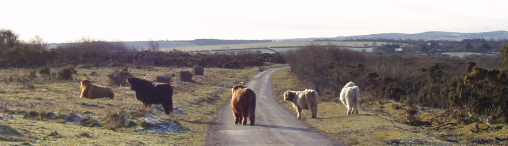 Bodmin Moor Neighbourhood Plans